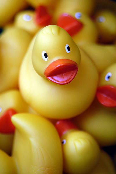 rubber ducks - Jeremys Home Store - 1