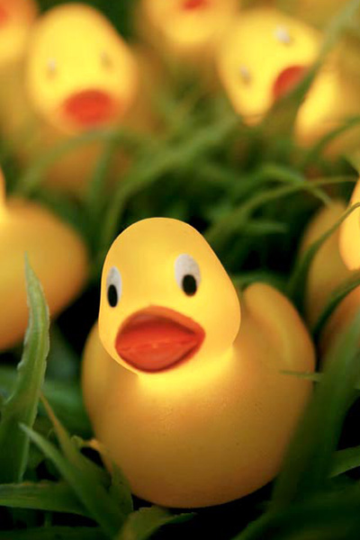 duck lights - Jeremys Home Store -13