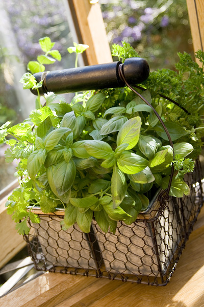 Swallowtail Hill Wire Basket With Handle - filled with herbs