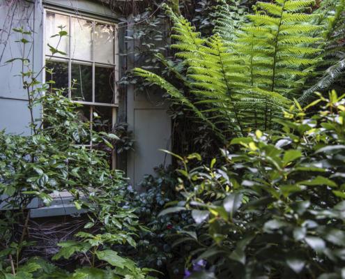 Plants, flowers, gardens